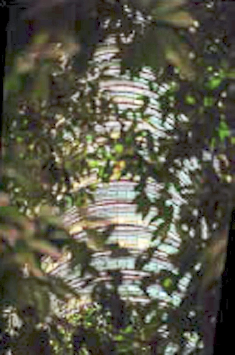 This piece titled 'Sefirot' shows the Petronas Twin Towers from a unique angle amid trees.