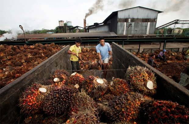 Malaysia could replace Indonesia as top palm oil supplier to