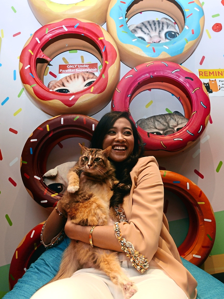 Purr Fect Playground For Mind Therapy The Star
