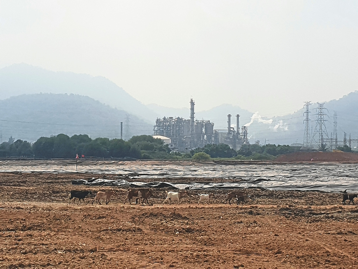 Goats stroll along the expansion site of Lotte Chemical's petrochemical plant.