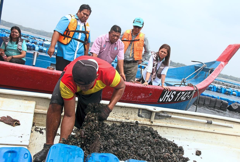 Anita Azrina (right) watching fisherman Awi Mee collecting mussels at Kampung Kuala Masai. —filepic
