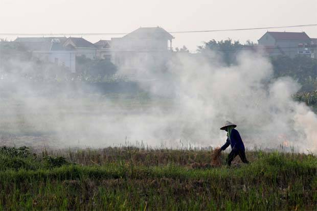 Thai rice price rises, Vietnam plans shipment to Malaysia