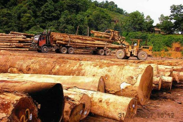 Of late, many top timber companies such as Ta Ann Holdings Bhd, are increasingly sourcing for plantation logs as the raw materials for plywood manufacturing.(File pic shows Ta Ann Holdings timbre operations)