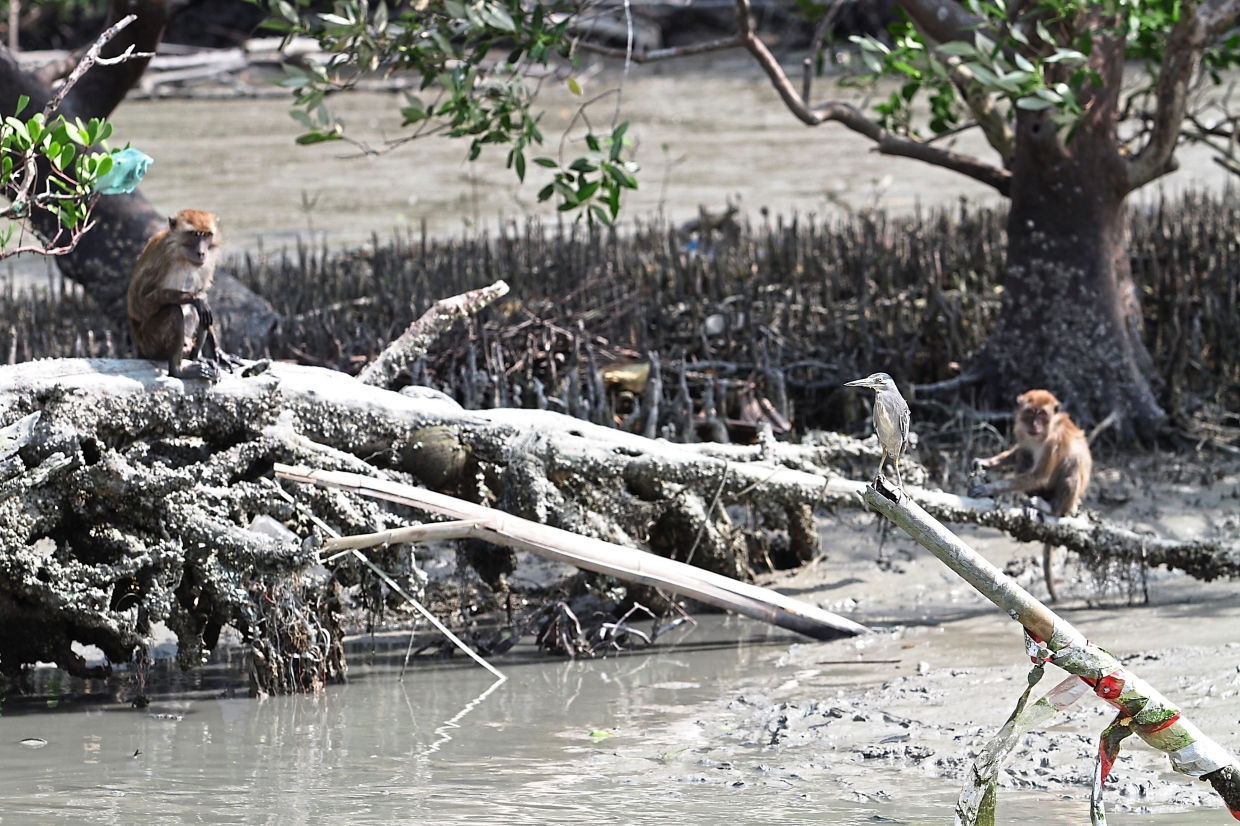(Above and below) Wildlife can be seen in the mangrove forest during the tour.