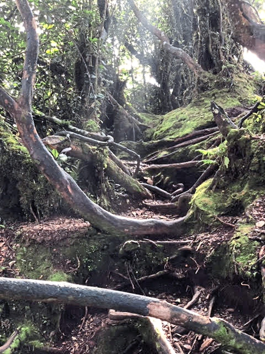 One of the scenes inside the Mossy Forest.