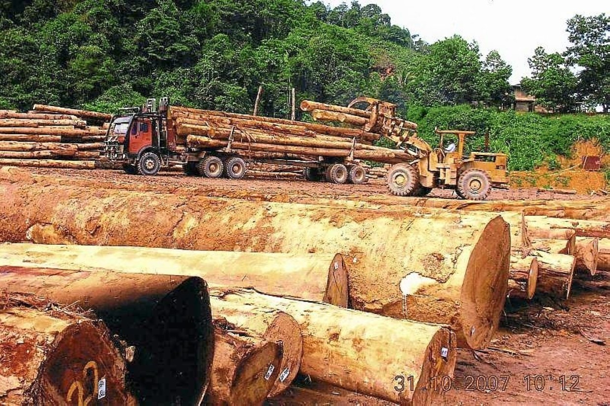 Higher output: Ta Ann's timber operation. In the first half of 2019, Ta Ann's logs production soared to 211,731 cu m, up nearly 175%, from 77,661 cu m in the corresponding period last year.