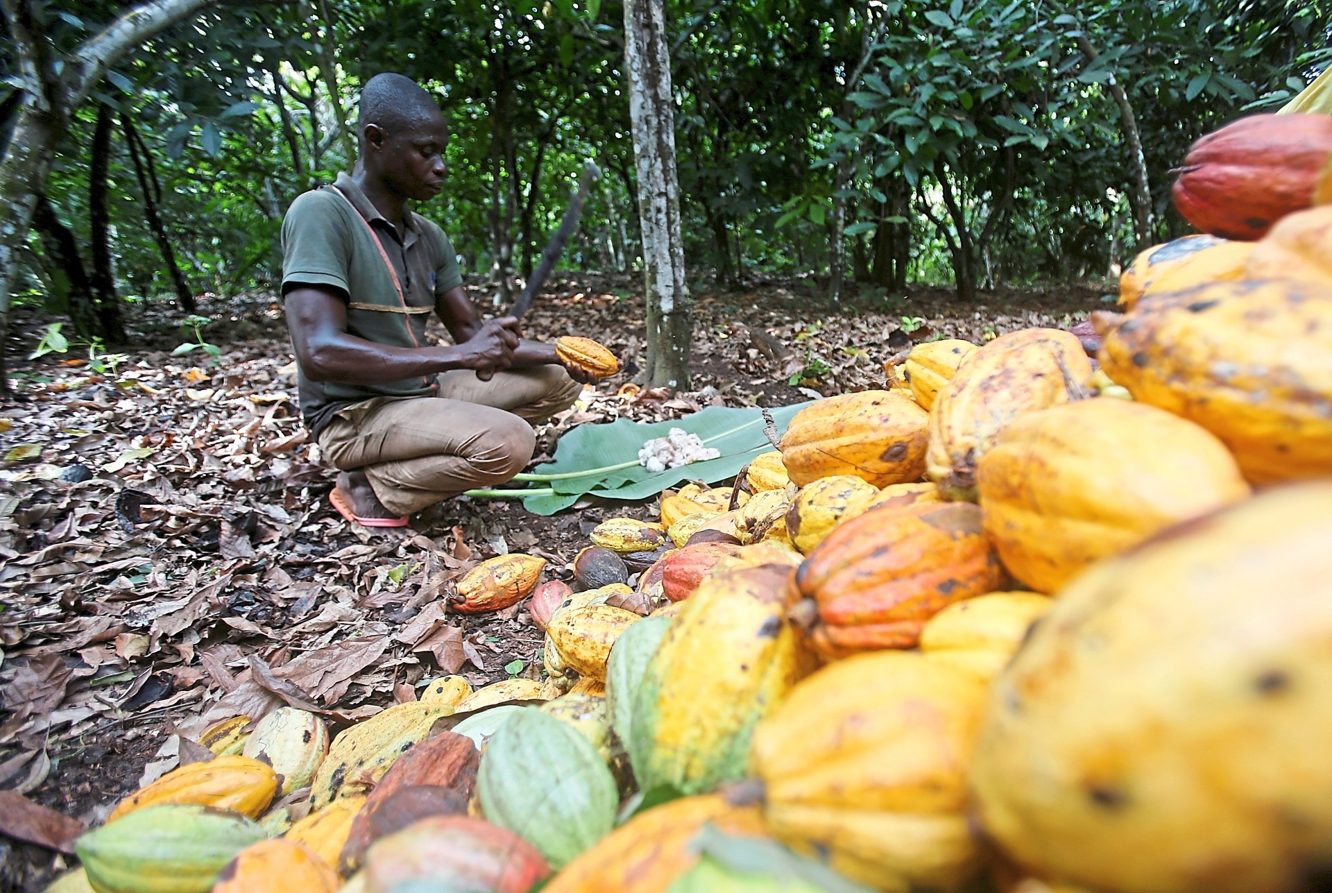 Chocolate makers face ultimatum over pay for poor cocoa farmers