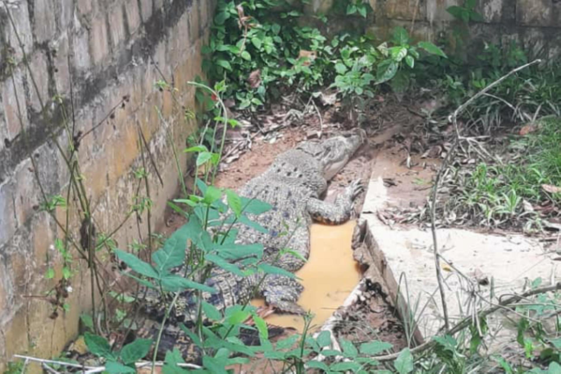 Illegal wildlife farm near Sibu raided, over two dozen endangered animals rescued