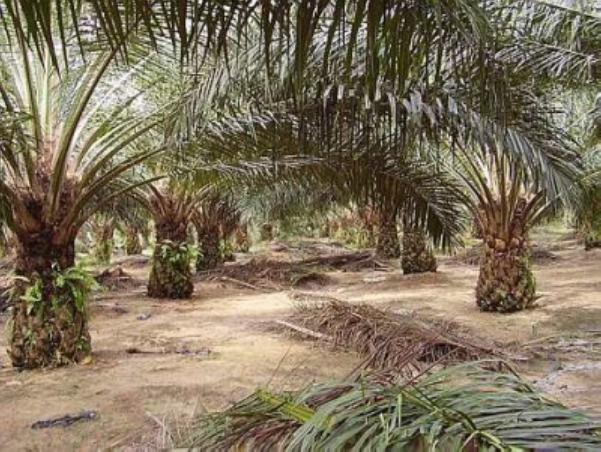 MPOA hopes India will continue to buy Malaysian palm oil