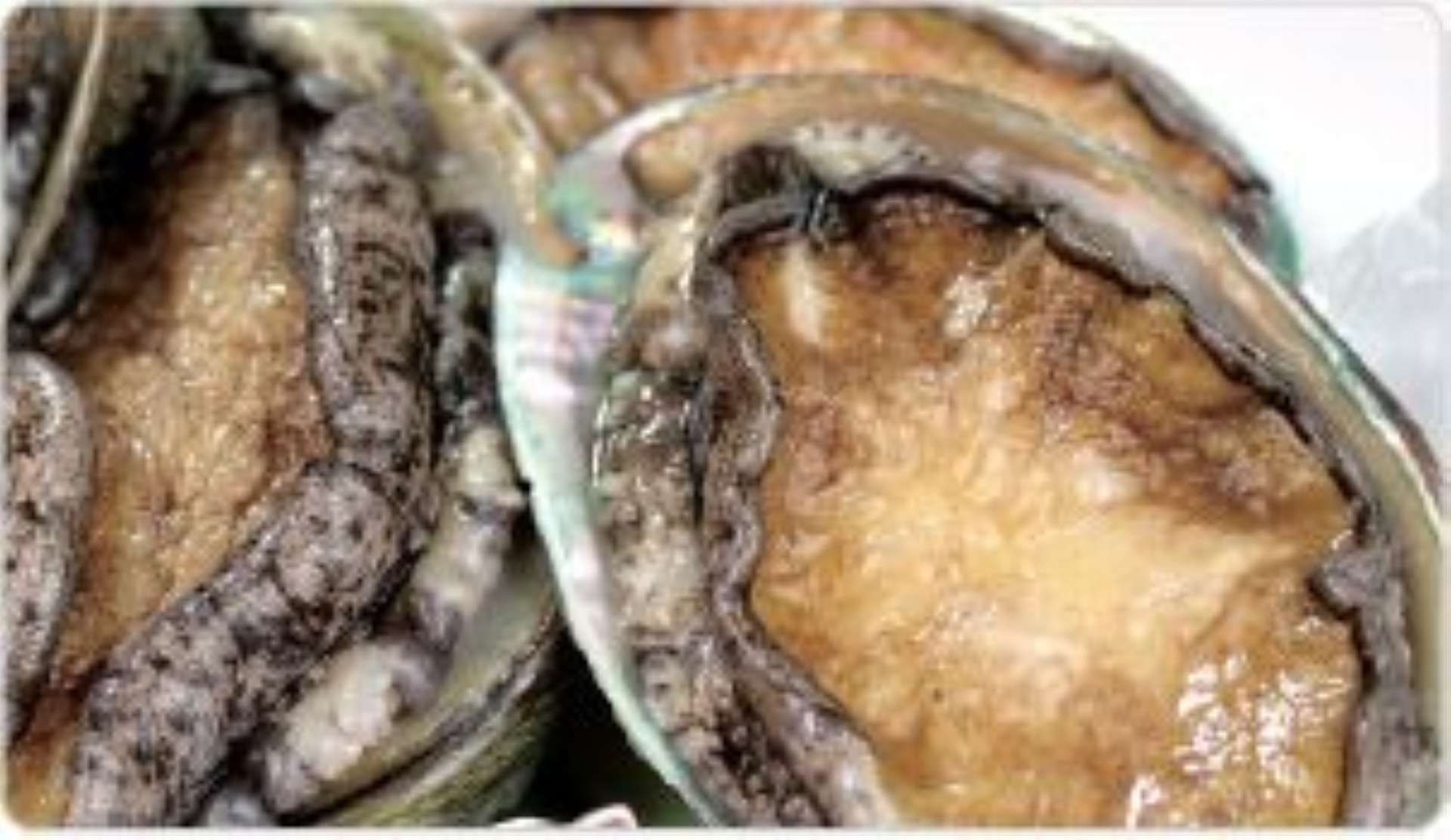Abalone is nutritionally almost perfect.