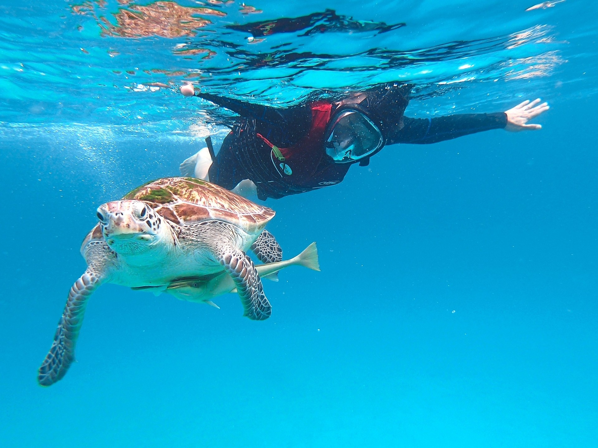 There are between six and eight turtles that regularly turn up at Redang Island's Turtle Point.