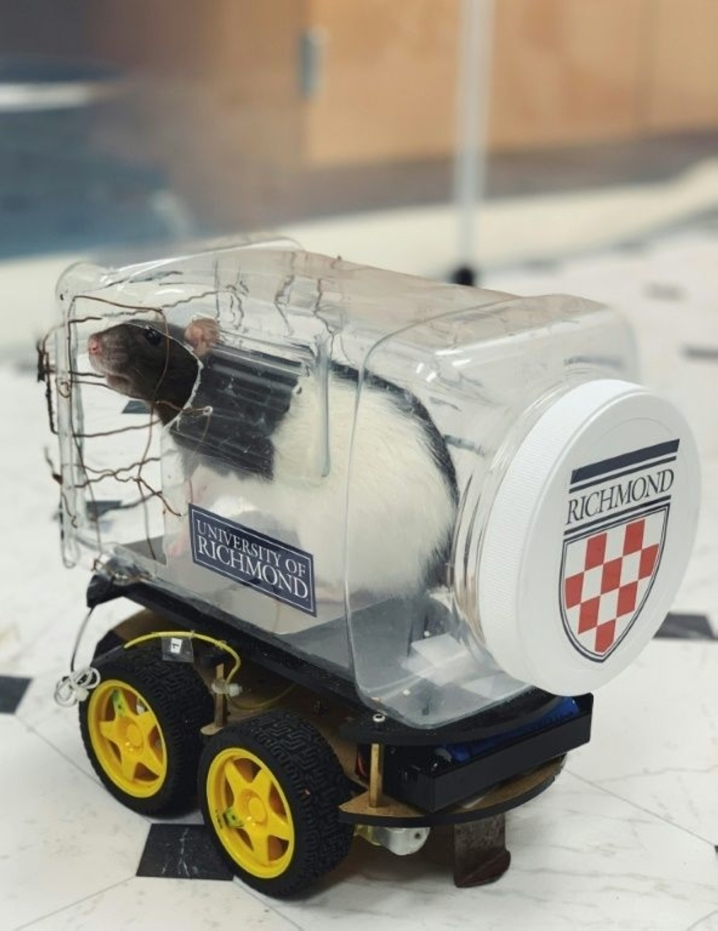 Scientists modified a robot car kit by adding a clear plastic food container to form a driver compartment with an aluminium plate placed on the bottom.