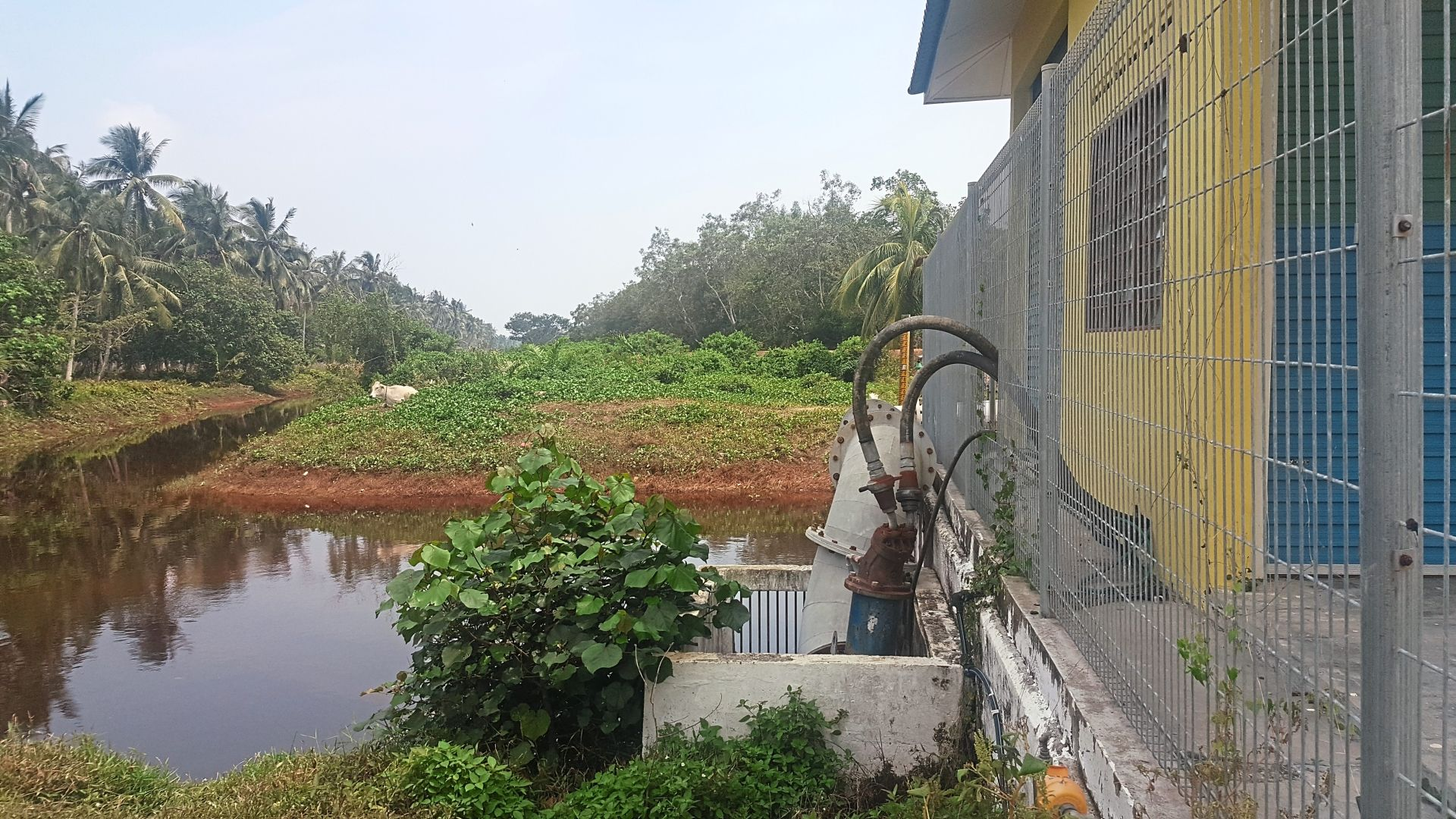 Water released from the floodgate along Sungei Durian and another floodgate are suspected to be cause of fishes dying.