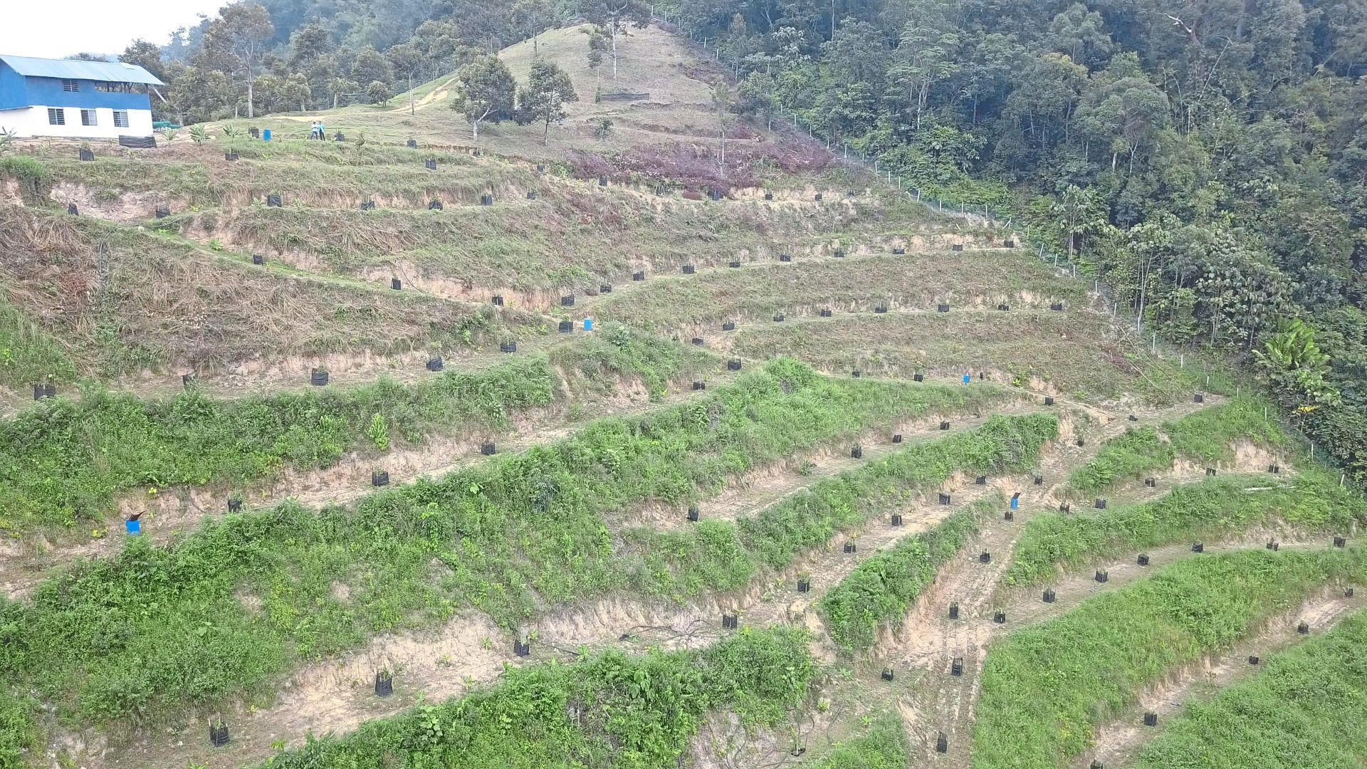 Higher value: The big move into durian plantation has pushed prices for plantation land multiple-fold over the last five years.