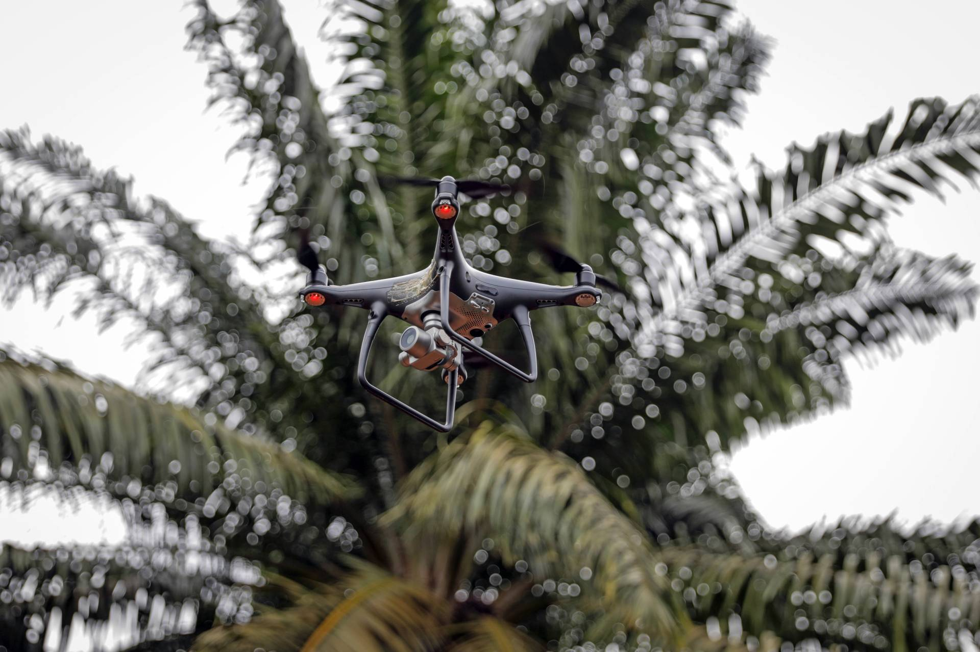 An SZ DJI Technology Co. Phantom 4 drone flies at the Genting Tanah Merah Estate. A single drone can capture images of about 2,500 hectares of oil palms a day, while a human can cover only five hectares, said Tao.