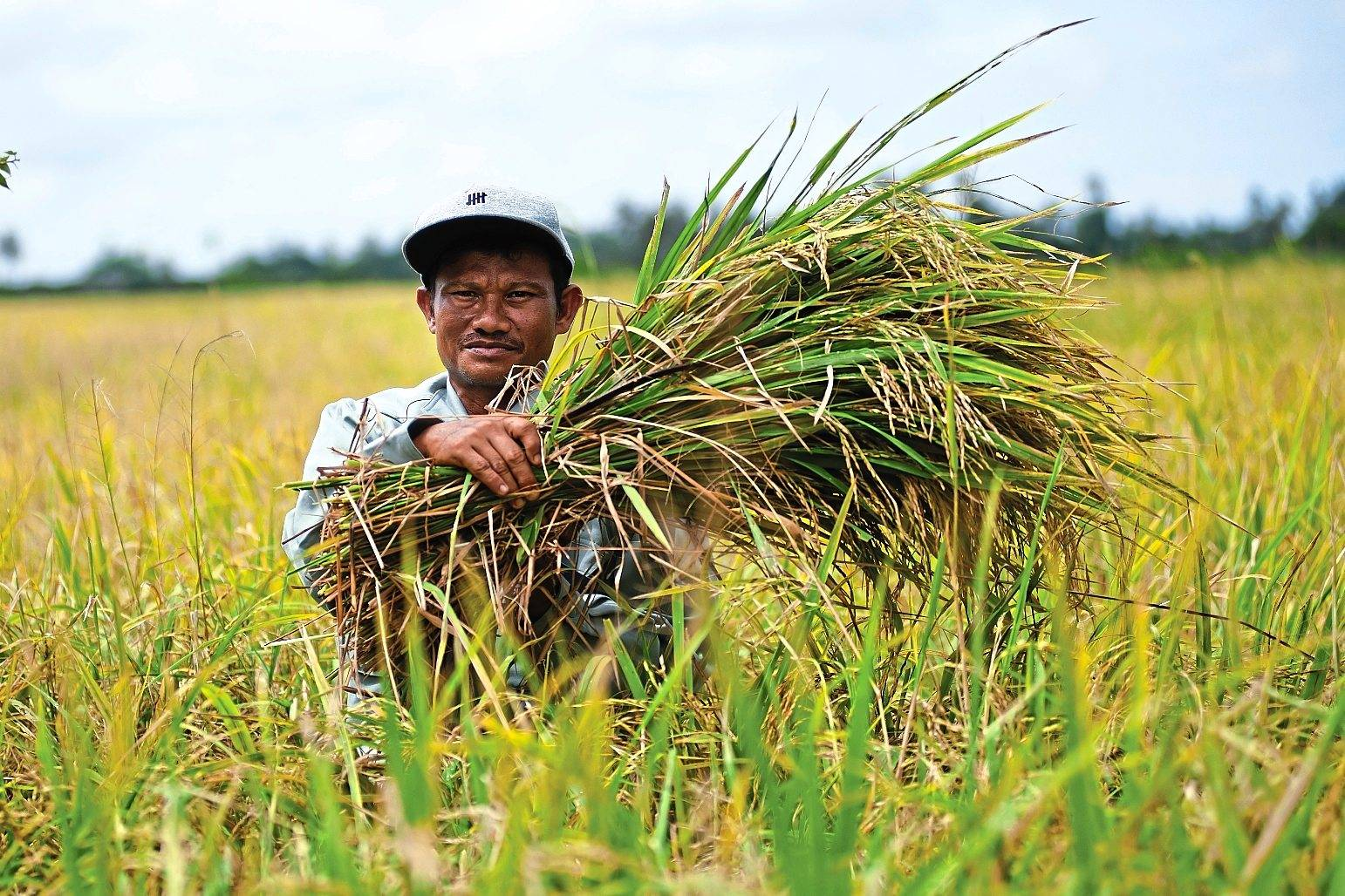 Sustainable income: Established in 2012, the Nestle Paddy Club provides rice farmers in Kedah with sustainable income opportunities. The scheme has an average participation of 260 farmers in 2018, producing yield of 5.5 tonnes per hectare.