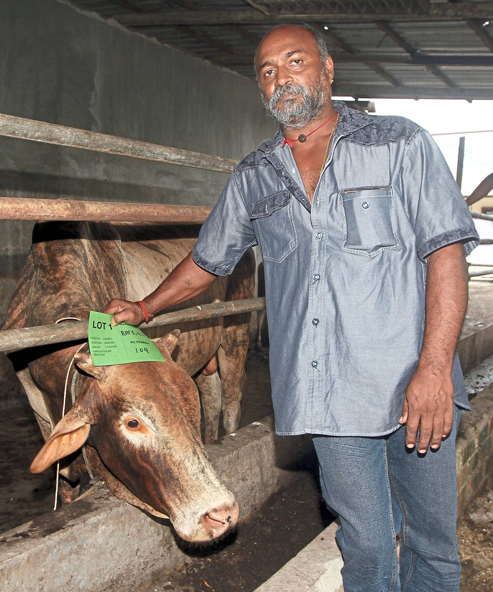 Ramachandran with the bull he bought for RM5,400 during the auction.