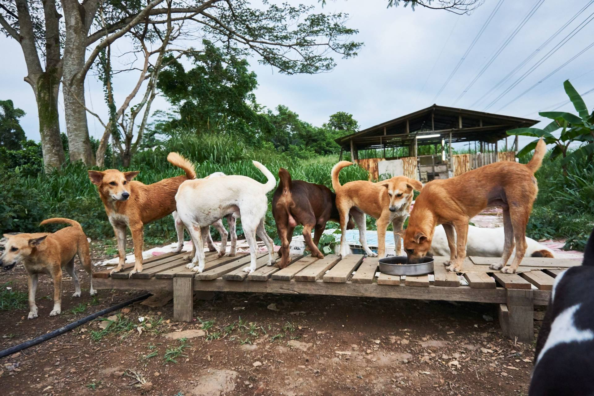 Some of the 120 dogs that are taken care of by Puppy's Loving Home in Serendah, Hulu Selangor.