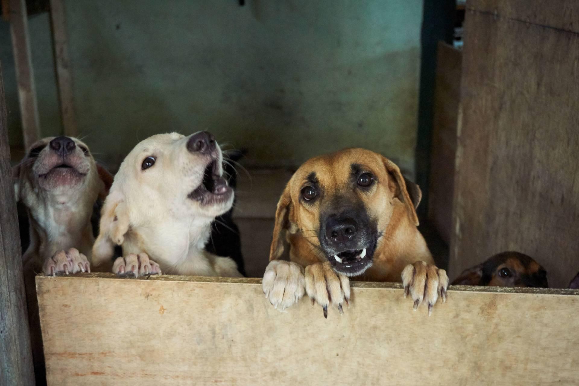 Playful puppies awaiting adoption, at Puppy's Loving Home in Serendah, Hulu Selangor.