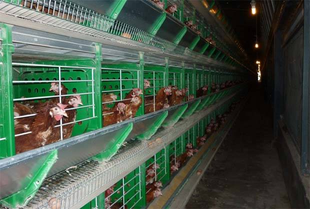 The integrated livestock farming (ILF) segment should continue to record sequential margin improvement on a reduction in the volatility of feed raw material prices and higher earnings contribution from its regional poultry operations on the back of higher production.