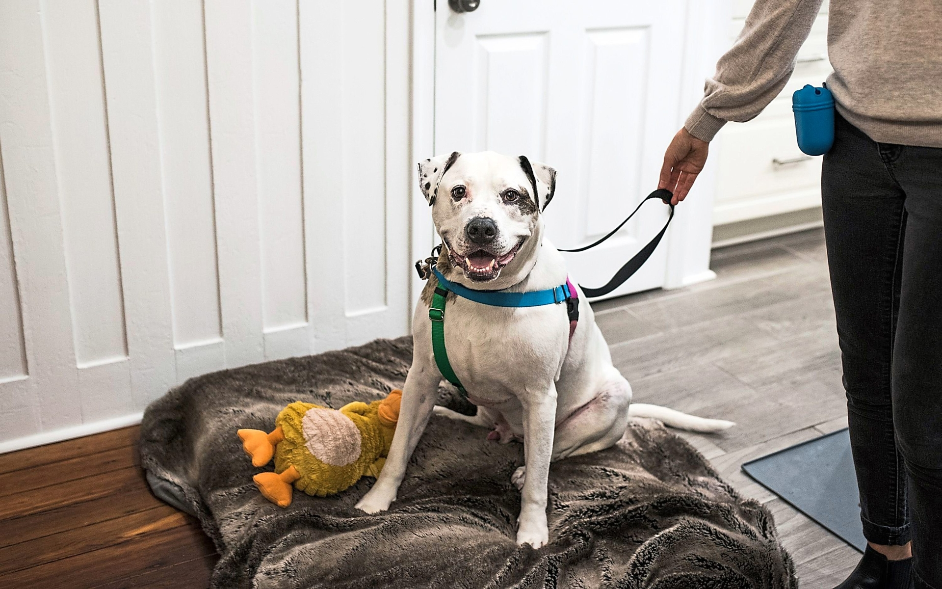 Bentley finally has a new place to call home, thanks to a loving couple in Graduate Hospital, Philadelphia, the United States.