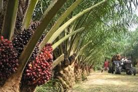 TH Plantations to dispose of two Sarawak units for RM170mil