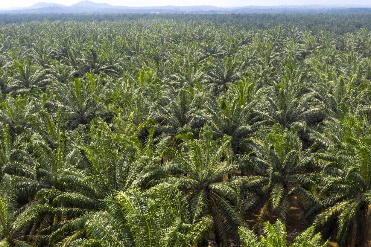 Oil palm plantation investment in malaysia hsbc investment banking frankfurt weather