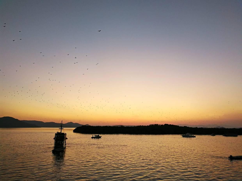 Daily exodus of giant fruit bats returning to Kalong Island (Flying Fox Island) at sunset.