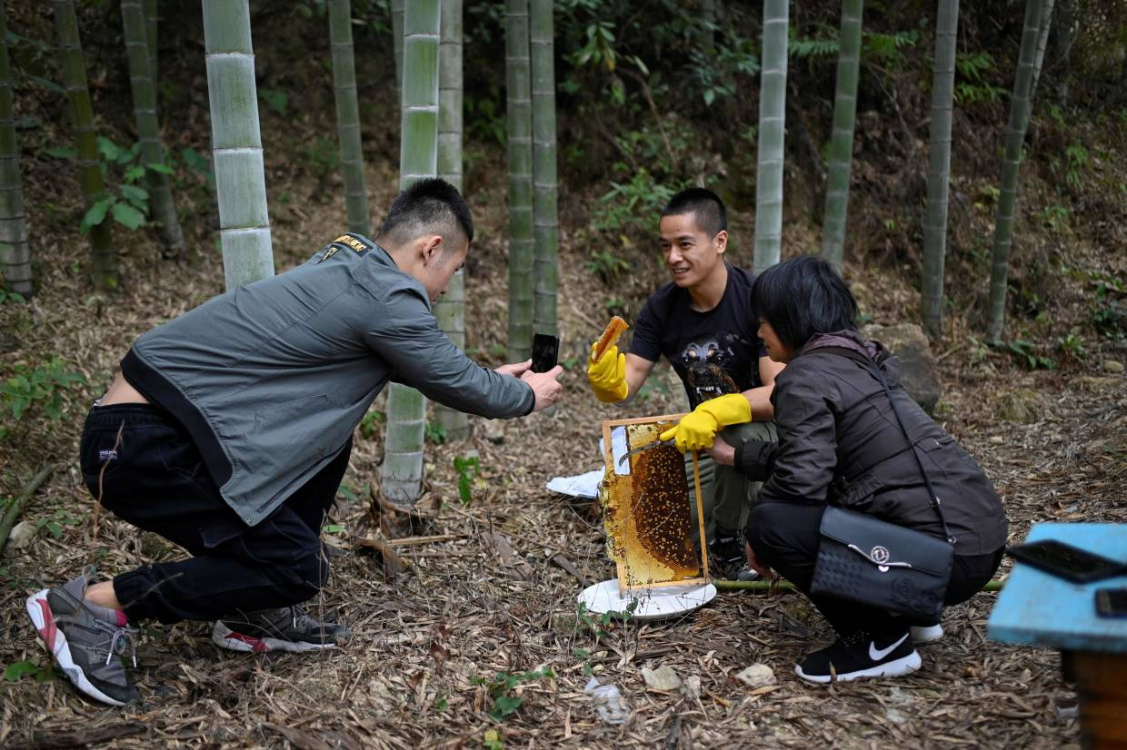 Ma's assistant (left) using a mobile phone to take a video as Ma (centre) and his mother prepare to taste honey at his apiary.
