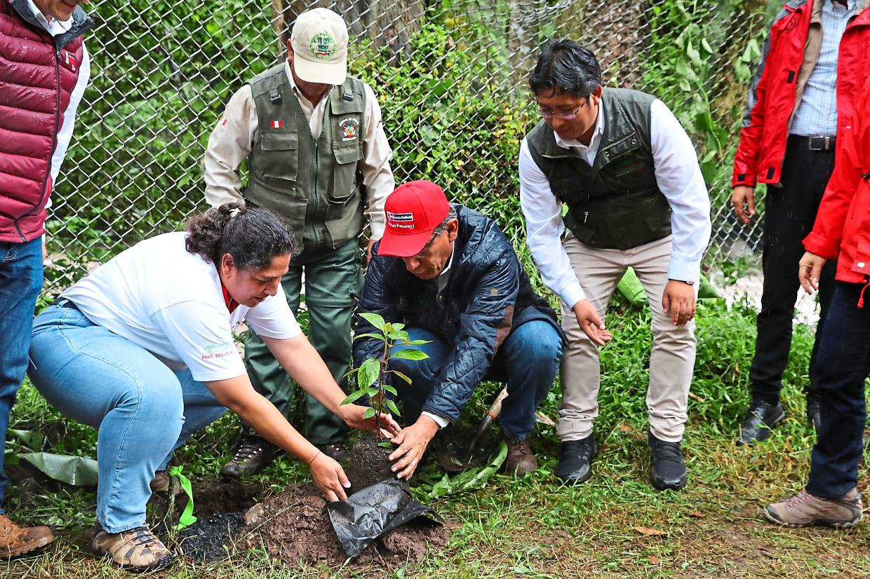 New life: Vizcara (centre) planting a tree at the Inca fortress enclave in the south-eastern Andes of Peru, near Cuzco, as part of the new reforestation campaign. – AFP
