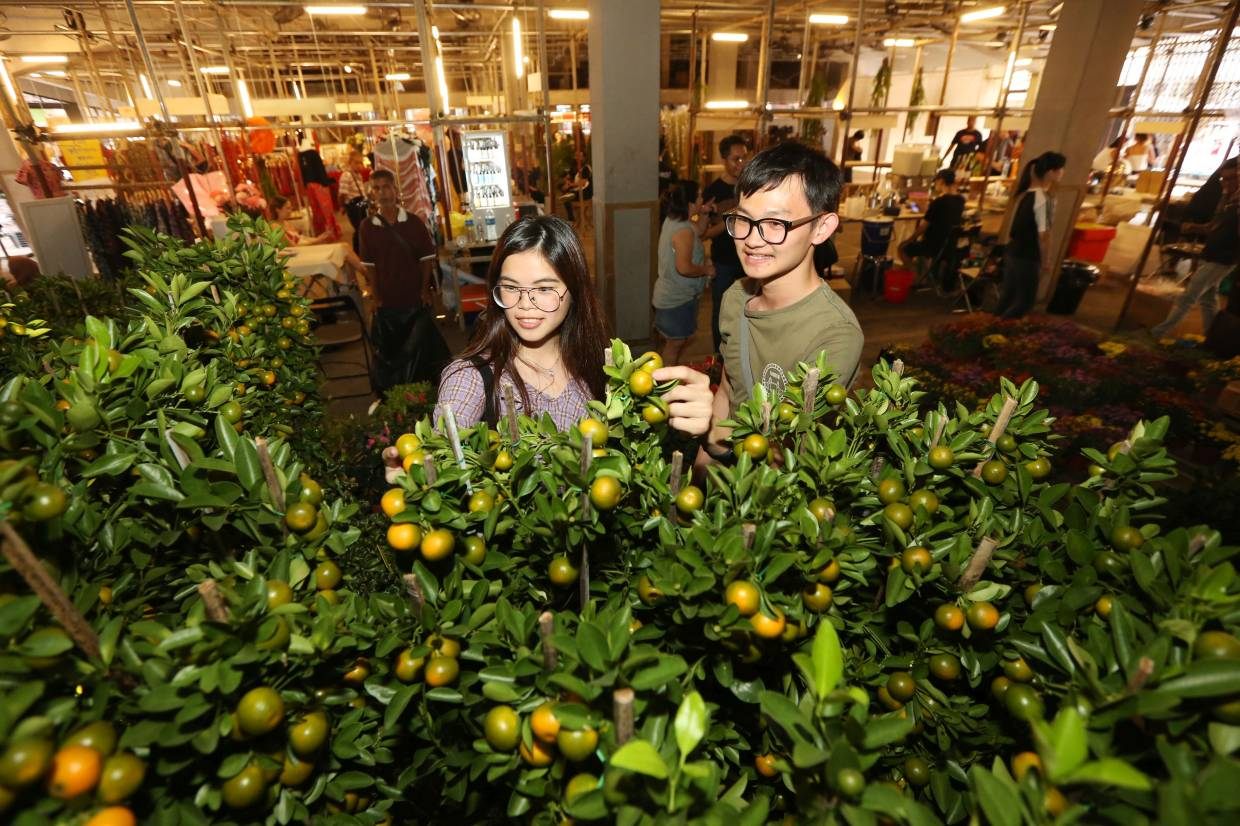 Get your lime trees and more sorted out at the Flower Market 2020 at REXKL on Jan 18 and 19. Photo: Filepic