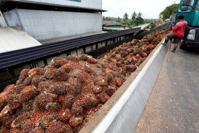 Crude palm oil seen capped at RM3,300 for next 6 mths - analyst James Fry
