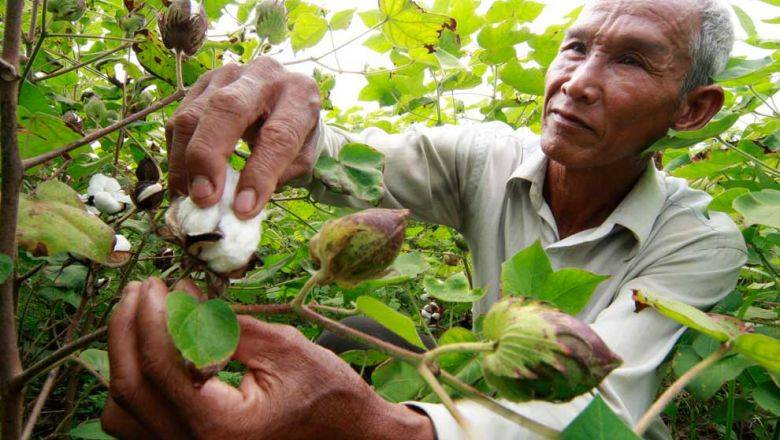 China firm to invest 'millions of dollars' in Cambodia's cotton industry