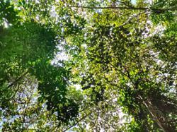 FRIM: Langat forest has endangered species, should be protected
