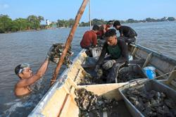Sungai Muar becoming saltier