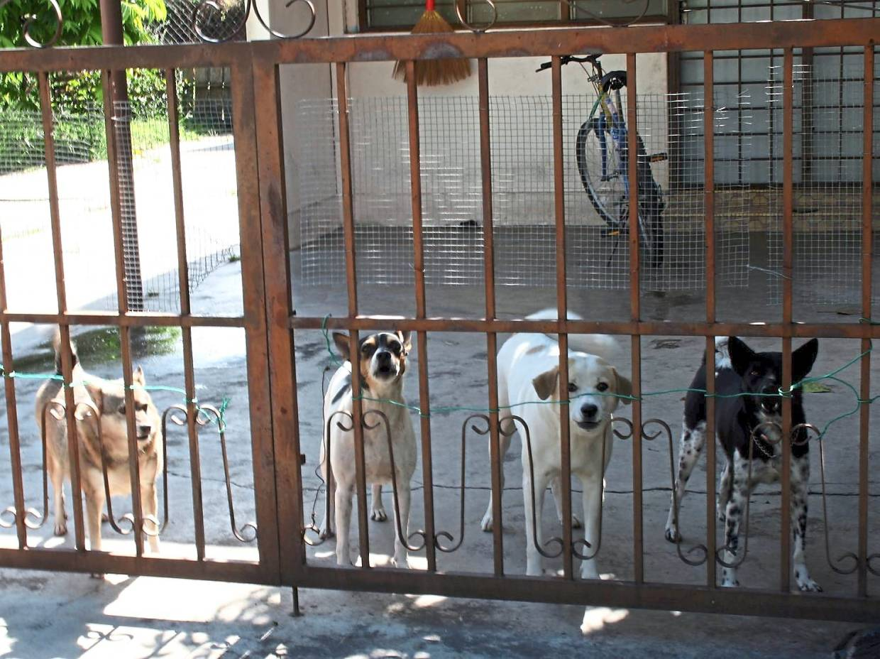 A maximum of three dogs are allowed for semi-detached houses, four dogs for bungalows and for larger areas like farms, five dogs are allowed to be kept. — Filepic