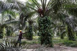 Crude palm oil futures extend gains on festival demand optimism
