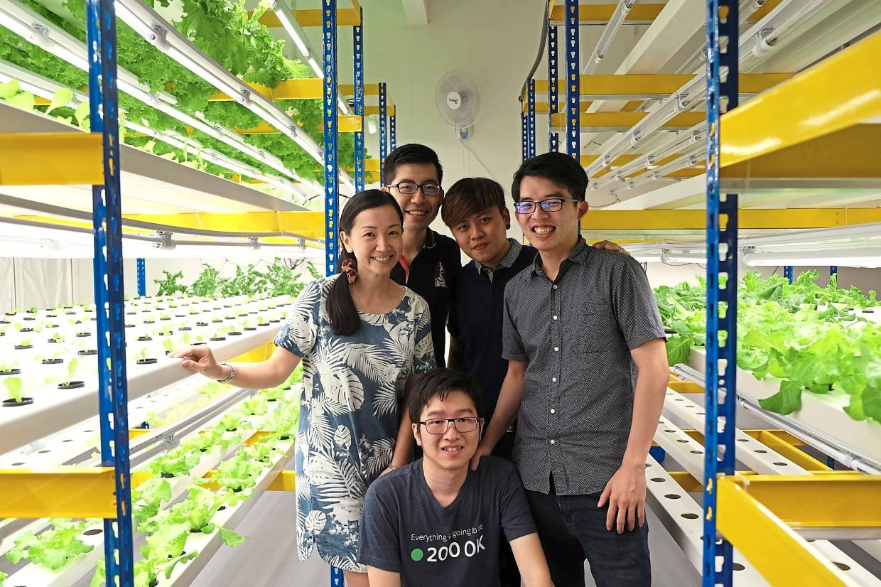 [The Star] 4 engineers believe vertical farming offers answer to food sustainability