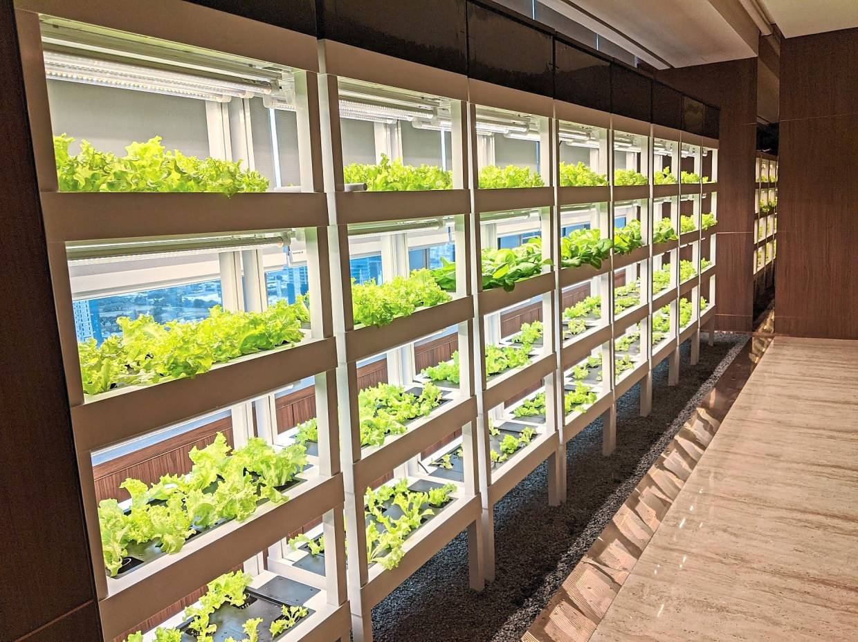 The YTL Green Office urban farming project by CityFarm.