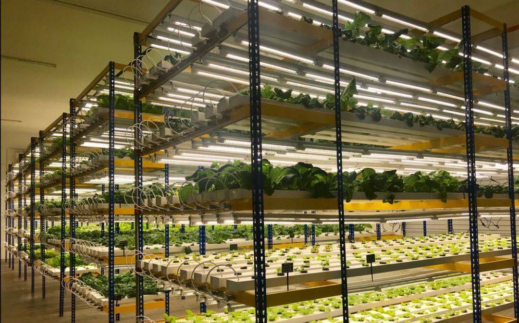 The Kuching commercial indoor farm project, set up in 2017, spans 5,000sq ft (464sq m) and has a 12,000 plant capacity.