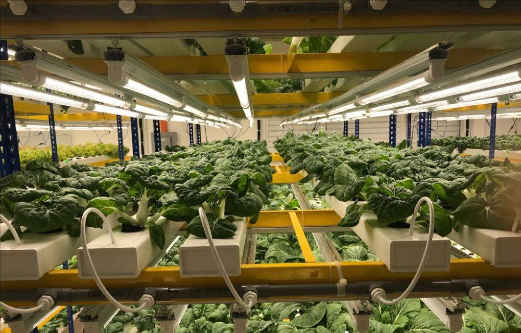 Vertical farming refers to a large scale, mostly indoor, type of farming where produce is grown vertically in layers of racks.
