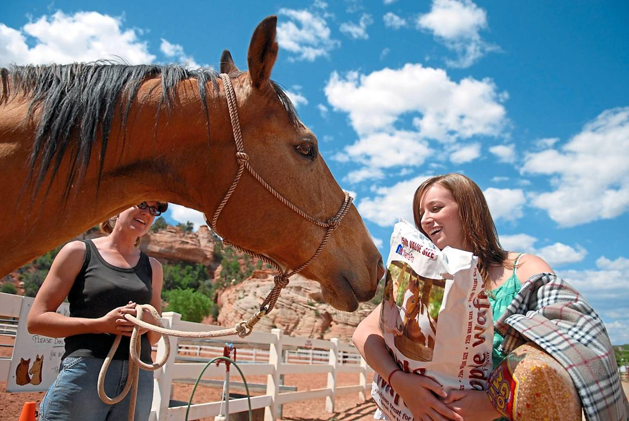 Horse Haven is one of the areas volunteers can select from at Best Friends Animal Sanctuary.