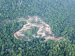 Groups hope politics will not affect Perak forestry issues