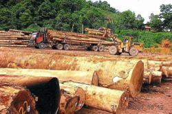 Japan's timber boost for Ta Ann