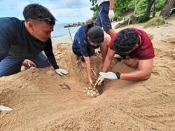 Thailand beachfront hotel safeguards two turtle nests
