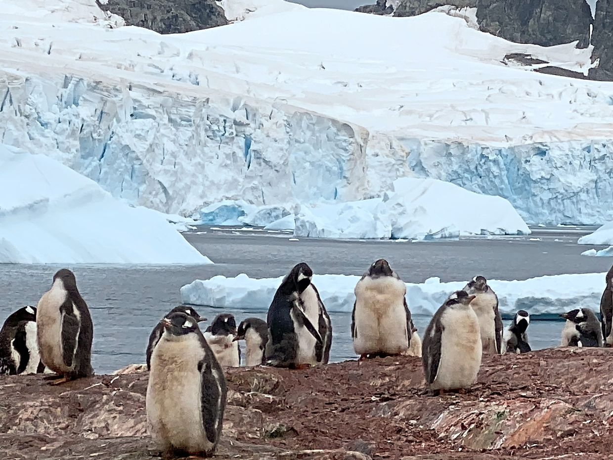 Penguins are lovely, you'd never tire of watching them in their element.