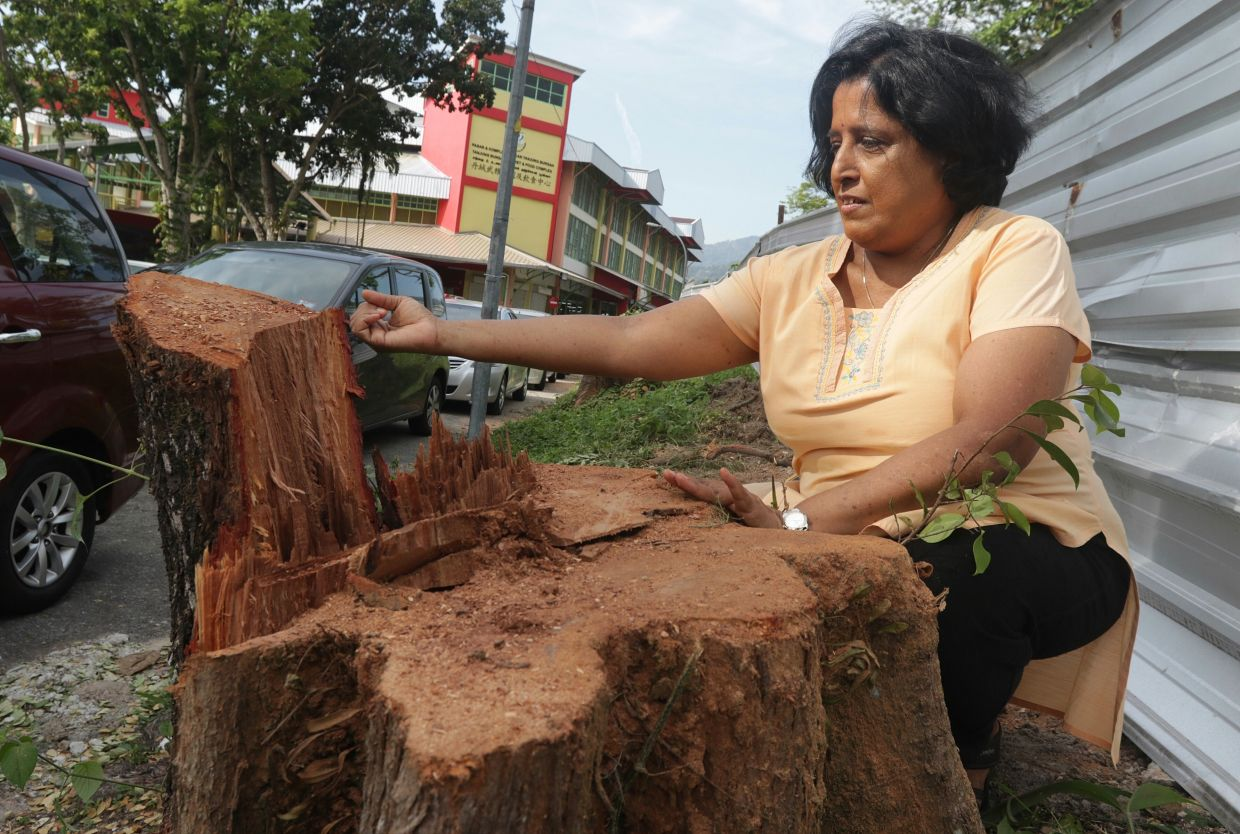 Meenakshi at the stump of an old angsana tree that had been cut down to make way for development in Penang. — Filepic