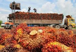 Palm oil industry gets MCO exemption