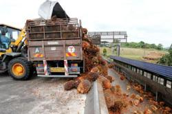 Palm oil industry initiates voluntary lockdown among employees