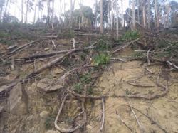 Bukit Larut reserve in peril
